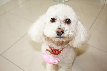【犬の写真】