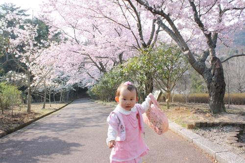 2009年4月6日_お花見3