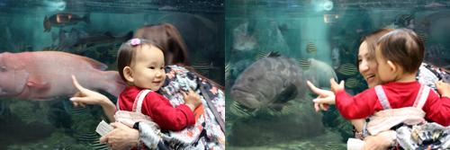 20090516_水族館1