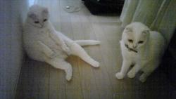 母ネコ(バービー)と娘ネコ(フェンディ)