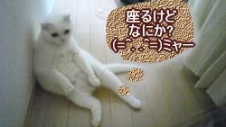 ネコだって座る (=^. .^=)ミャー