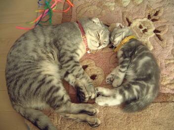 父ネコと息子1
