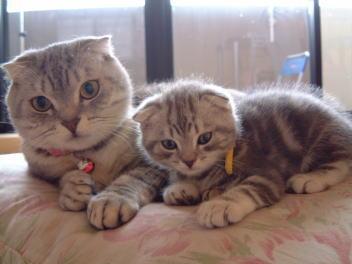 父ネコと息子2